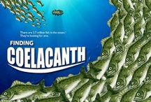 Coelacanth / Coelacanths - living fossils from the depths of our seas...