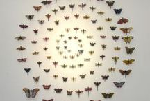 Wings / Butterflies, dragonflies and other colours...