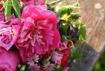 Spring / by Que bueno es vivir