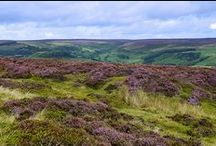 The Dales and Moors
