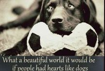 Pet Quotes / The quotes that say how we feel about our pets. #quotes #pets #animals #cats #dogs #horses / by Vetsupply Source