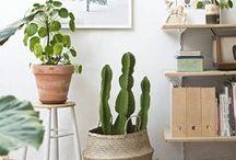 Deco | Plants / Decorar con plantas de interior / Plants