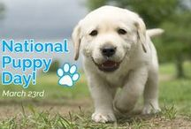 National Puppy Day / March 23rd is National Puppy Day! How will you be celebrating your pup today?