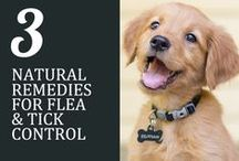 Flea & Tick Prevention / It's not uncommon for cats and dogs to get fleas. Here are some tips on how to prevent them!