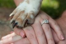 Popular Wedding Guests / popular canine wedding guests...