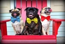 Dogs (mostly pugs!) galore / by Brie McElwee