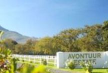 Avontuur Wine Farm / Avontuur Estate, home of Fine Wines and Fast Horses, nestles against the Helderberg between Stellenbosch and Somerset West. Visit us on the Stellenbosch Wine Route for wine tasting, wine sales and a bite to eat in our restaurant.   http://www.go2global.co.za/listing.php?id=2248&name=Avontuur