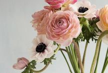 Flowers & Plants ❤ / Flowers - Plants - Cactus - Indoor - Homedeco