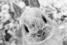 Animals ❤ / Animals - Pets - Wild Animails