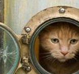 pet abodes + remedies / animal friends