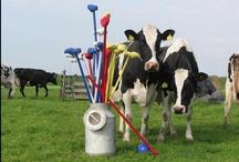 De Boerenbelevenis  / De boerenbelevenis heeft 80 melkkoeien, 80 kalfjes van 1 dag tot 2 jaar. De boerenbelevenis is een boerderij met koeien waar nog dagelijks gemolken wordt. Ook kunt u zomaar getuige zijn van een nieuw leven op de boerderij, want dat gaat het hele jaar gewoon door!