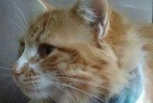 Gatunos / gatos lindos