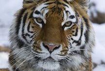 Power Animals / Animal medicine