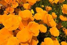 Minden, ami narancssárga / Bakker in Orange