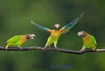 Madarak a kertben / Birds in gardens