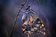 Pillangók a kertben / Garden with Butterflies