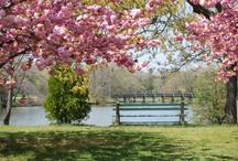 Spring Lake, NJ / by Ward Wight Sotheby's International Realty