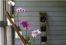 Modern Container Gardens / Add a little zen to your yard with these contemporary container garden ideas. / by Katie   lajollamom.com