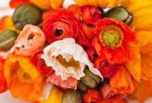 Orange,Coral and Peach Weddings