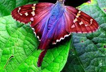 Kupu2 / Butterfly / Vlinder. / Kupu 2 / Butterfly /Vlinder !