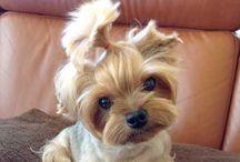 Funny dog. / Funny Dog !