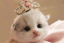 Funny Cat. / Funny Cat !