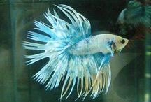 Fish. / Fish !