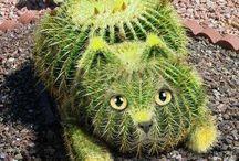 Cactus & Succullents plant. / Cactus & Succulents plant !
