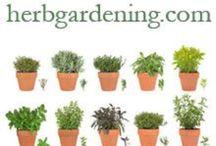 Herbs. / Herbs !