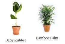 Air Plants. / Air Plants !