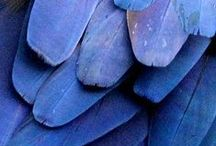 Blå / All that blueness
