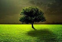 A LONE TREE / by Carolyn