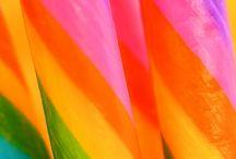 Color Inspirations: Spectrum