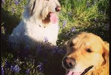 Dogs of Paraiso / These furry friends keep us smiling!