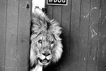 Animalistic tendencies