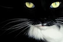 Amo los gatos *-*