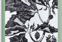 Art: drawing, etching, engraving