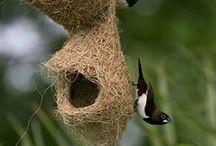 Bird Nests & Eggs