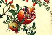 Botanical: Illustration & Photography