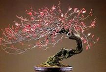 Japan: Bonsai  & Miniature Gardens