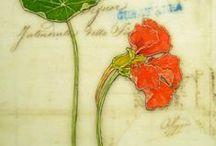 Art: Nasturtium (Tropaeolum majus) & other flowers