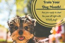 New Year - New Dog! / Did you get a new dog for Christmas?  Have a dog your just making some resolutions for?  This board has some good ideas, and some good ol'-fashioned fun for New Year's! #dogs #dogobedience #dogtraining #newyearnewdog #holidaydogs #newyeardogs