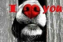 My Doggie Valentine / Celebrating the four-legged love of your life :-D  #dogs #valentinesdog #holidaydogs #valentinesday