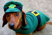 St. Patty's Day & March Madness / March brings out the luck-o-the Irish in all of us! And for the basketball fans, March Madness is here, too! #dogs #holidaydogs #stpatricksday #stpatricksdaydogs #dogtrianing  #marchmadness #marchmadnessdogs #basketballdogs