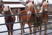 Homespun Christmas (Short Story)