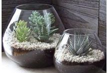 Plants / Hacks, tips, ideas, information and all kinda stuff all about indoor or outdoor plants