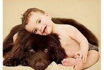 Dogs & cia