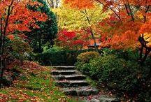 Beautiful Fall Backyards