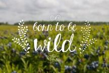 Bees, Berries & More!
