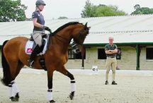 Equestrian Gifs